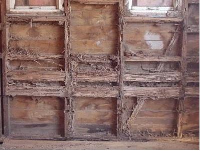 Termite FAQs  Rentokil Pest Control